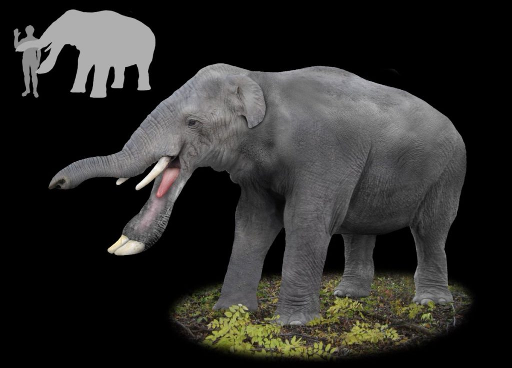 Platybelodon Elephant: Elephant with a Mouth of a Duck 12