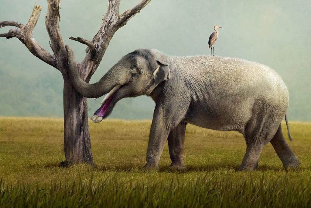 Platybelodon Elephant: Elephant with a Mouth of a Duck 15