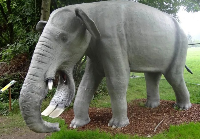 Platybelodon Elephant: Elephant with a Mouth of a Duck 11