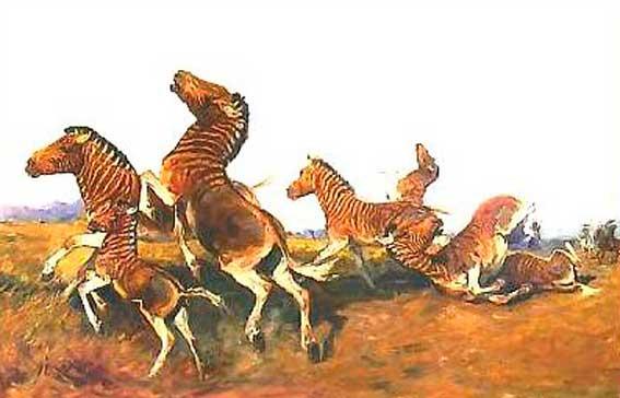 Zebra Quagga: Quagga were Extinct for 100 Years 2