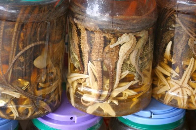 Exotic Drink: Snake Wine 25