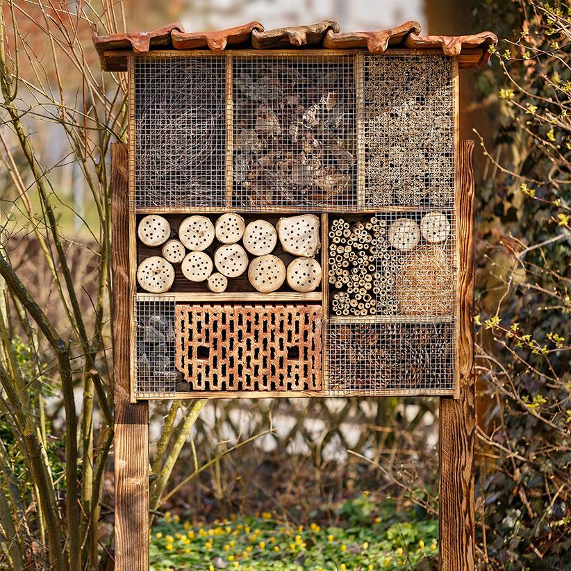 How To Bring Bees To Your Backyard 1