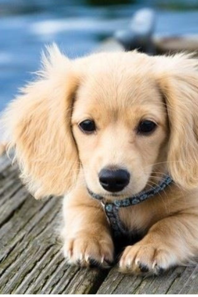 Tips To Getting The Perfect Dog For Your Children 1