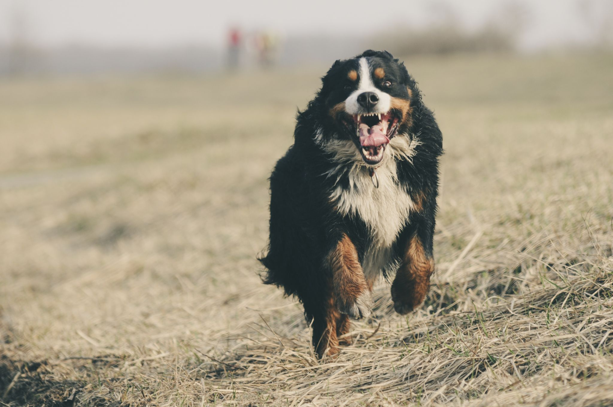 Legal Procedures That Can Happen If Your Dog Accidentally Bites Someone In Colorado 5