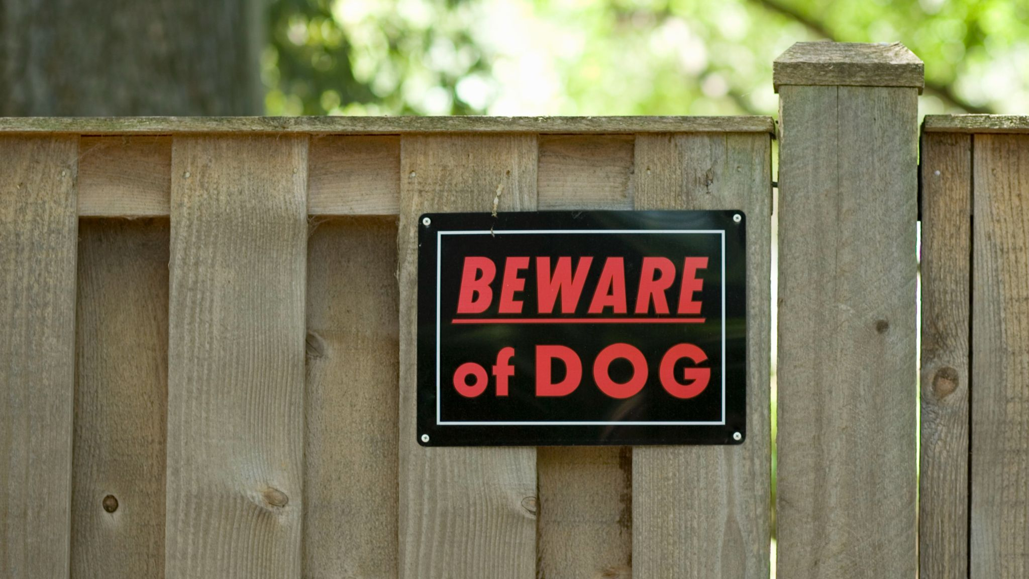 Legal Procedures That Can Happen If Your Dog Accidentally Bites Someone In Colorado 6