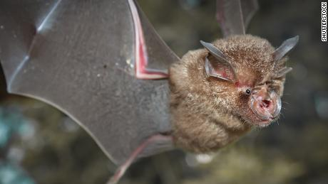 Do This Before Calling for Bat Removal Houston