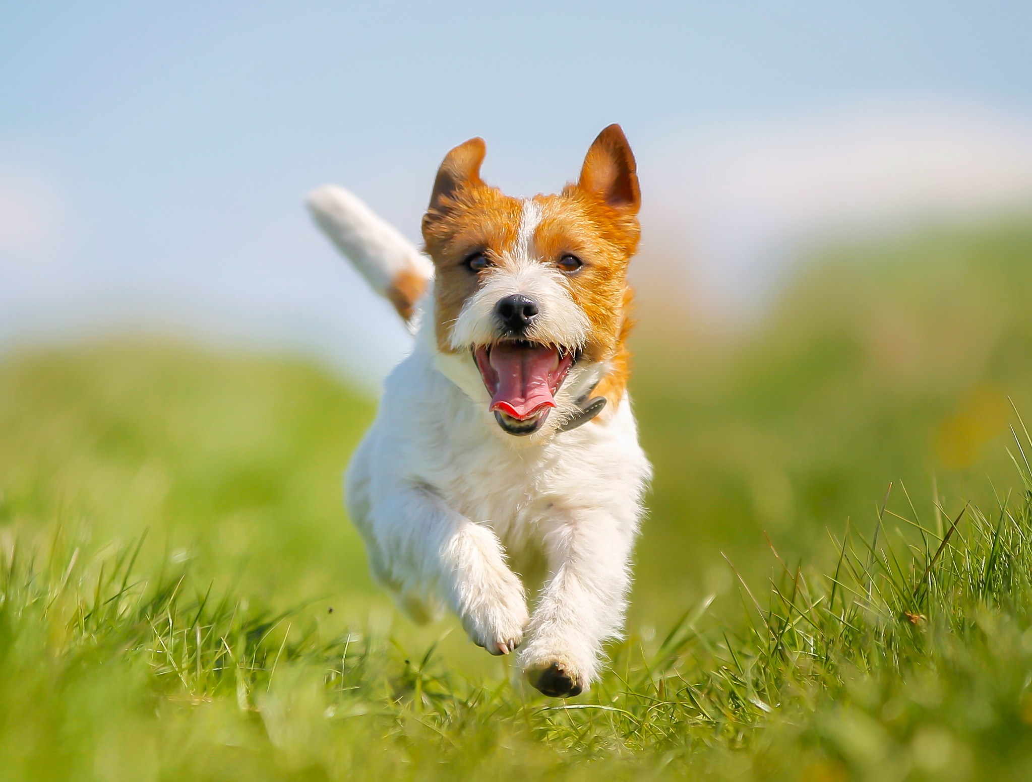 6 Best Things You Can Do To Keep Your Pets Healthy And Happy 7