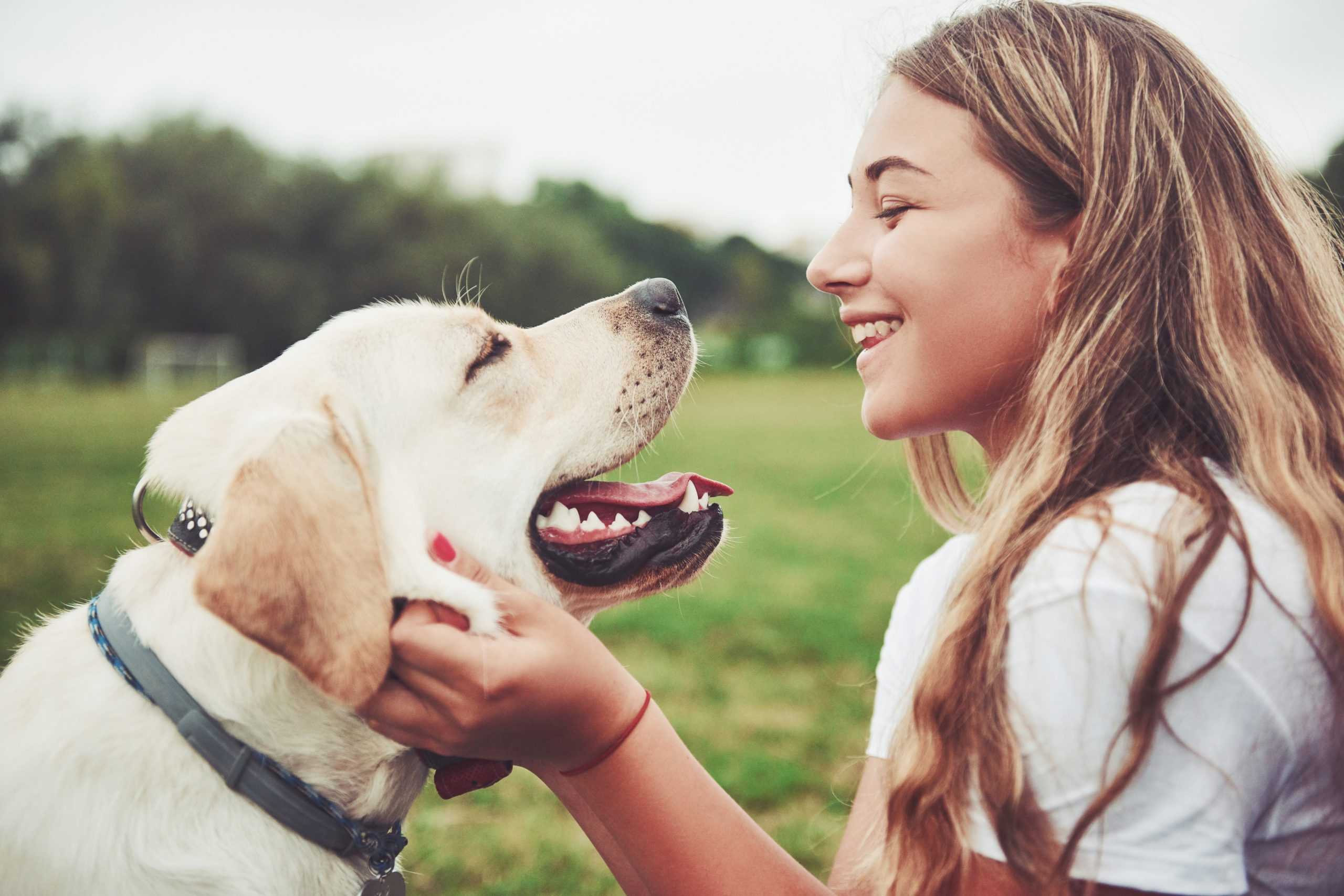 6 Best Things You Can Do To Keep Your Pets Healthy And Happy 9